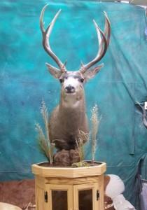 mule-deer-pedestal
