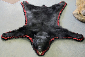 Taxidermy Rug Services